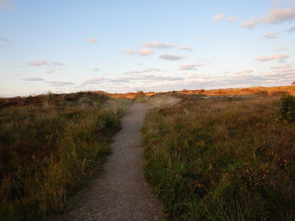 Schotterweg durch das Naturschutzgebiet