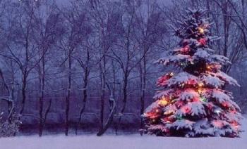 In California si adottano alberi di Natale