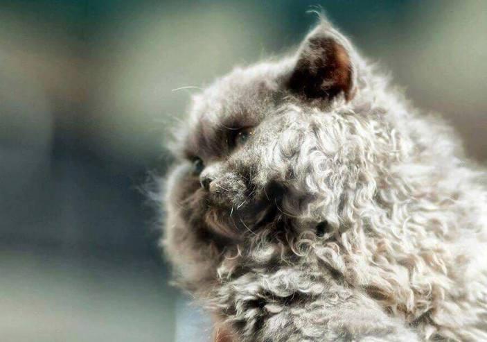 Il Comune di Treviso sostiene il gattile Enpa