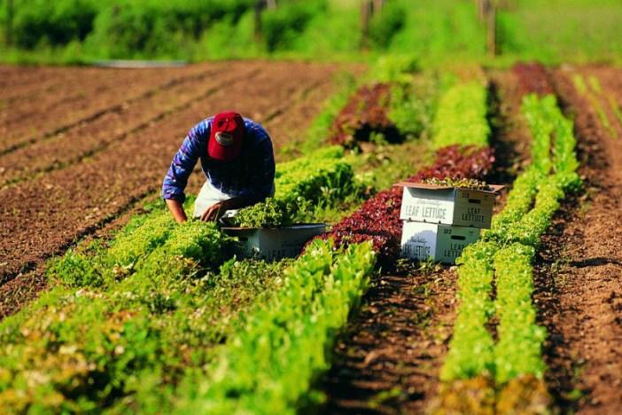 Covid 19: Coldiretti Campani, da Regione 79 mln per agricoltura