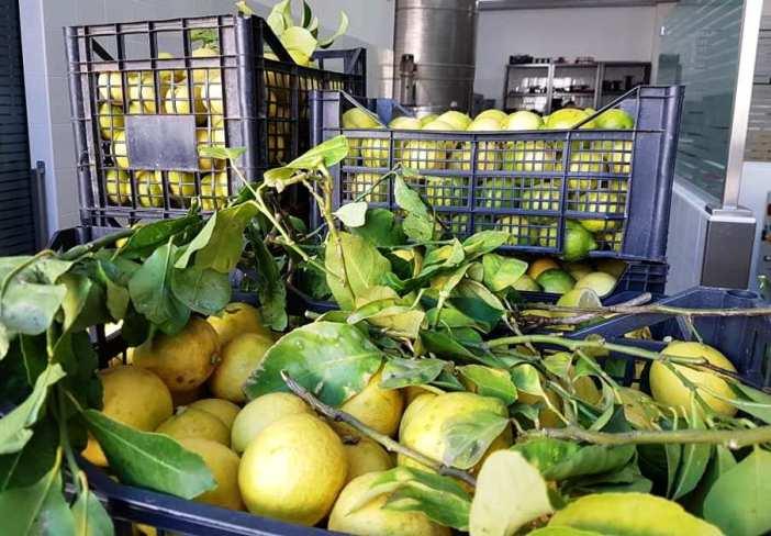Nasce Petrone Clean, igienizzante con olio essenziale di bucce di limone
