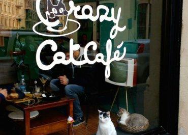 Il cat cafè di Milano, una pausa in compagnia di gatti