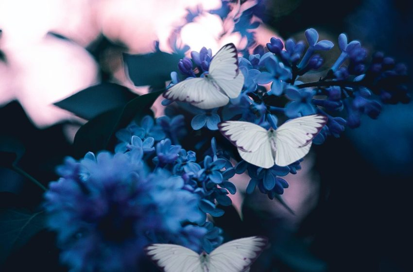 Butterfly Effect: che cos'è?