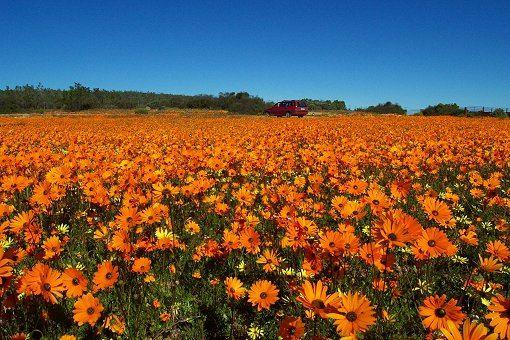 Namaqualand  Kapstadt in Sdafrika