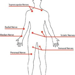 Radial Nerve Diagram Wiring Diagrams Ibanez Guitars Survival Series Part 1 Pressure Points And How To Use Them