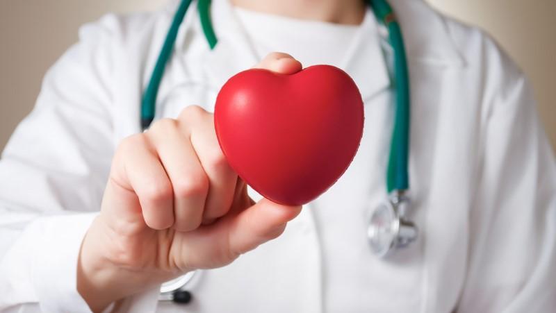 Kardiologia - egy kardiológus egy szív alakú stresszlabát mutat