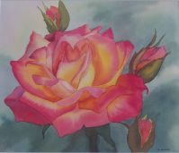 Sweet Rose - Watercolour 27 x 32 cms