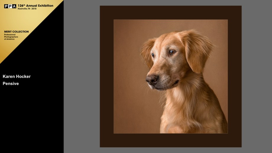 Pensive Golden Retriever wins PPA IPC merit in print competition