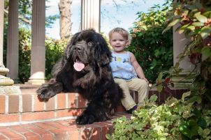 Baby and Newfoundland puppy portrait
