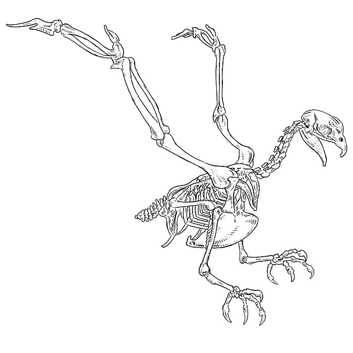 Eagle Skeleton Diagram