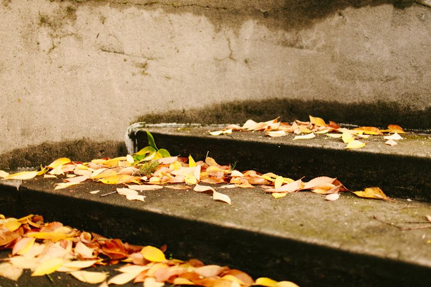 fall011