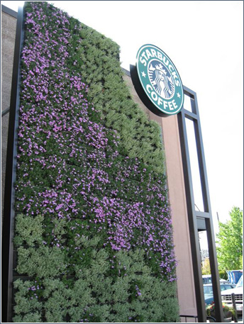 Green Walls - Starbucks