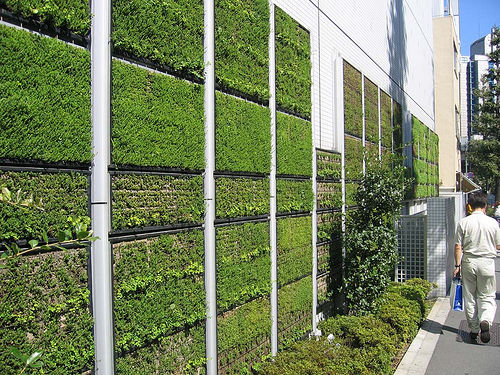 Green Walls by Nature!