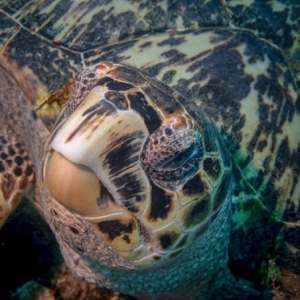 Sea turtle on ocean floor