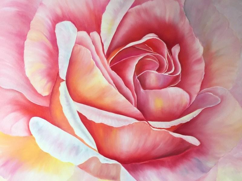 Soft Large Pink Rose