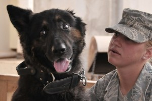 Soldier, Military Service Dog, Veteran's Day