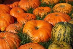 cinnamon, writers, spice, fall recipes, editors, healing, manuscript, pumpkins