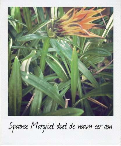 margriepl
