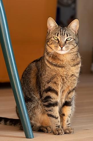 Mon chat Comète