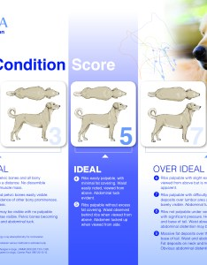 Healthy dog weight fat overweight canine obesity obese also and karingal vet hospital rh karingalvet