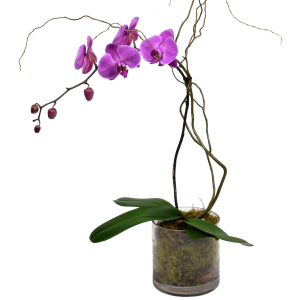 Elegant Single Stem Orchid