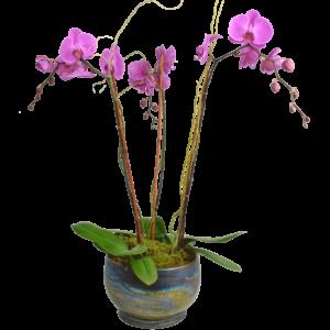 Tender Heart Flower Arrangement Designed By Karins Florist