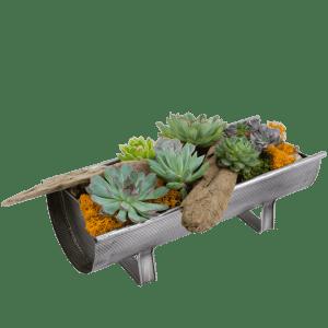 Premium Succulent Planter