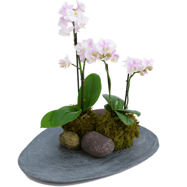Slated Kokedama Orchid
