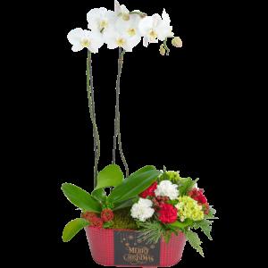 Winter Solstice Orchid Arrangement