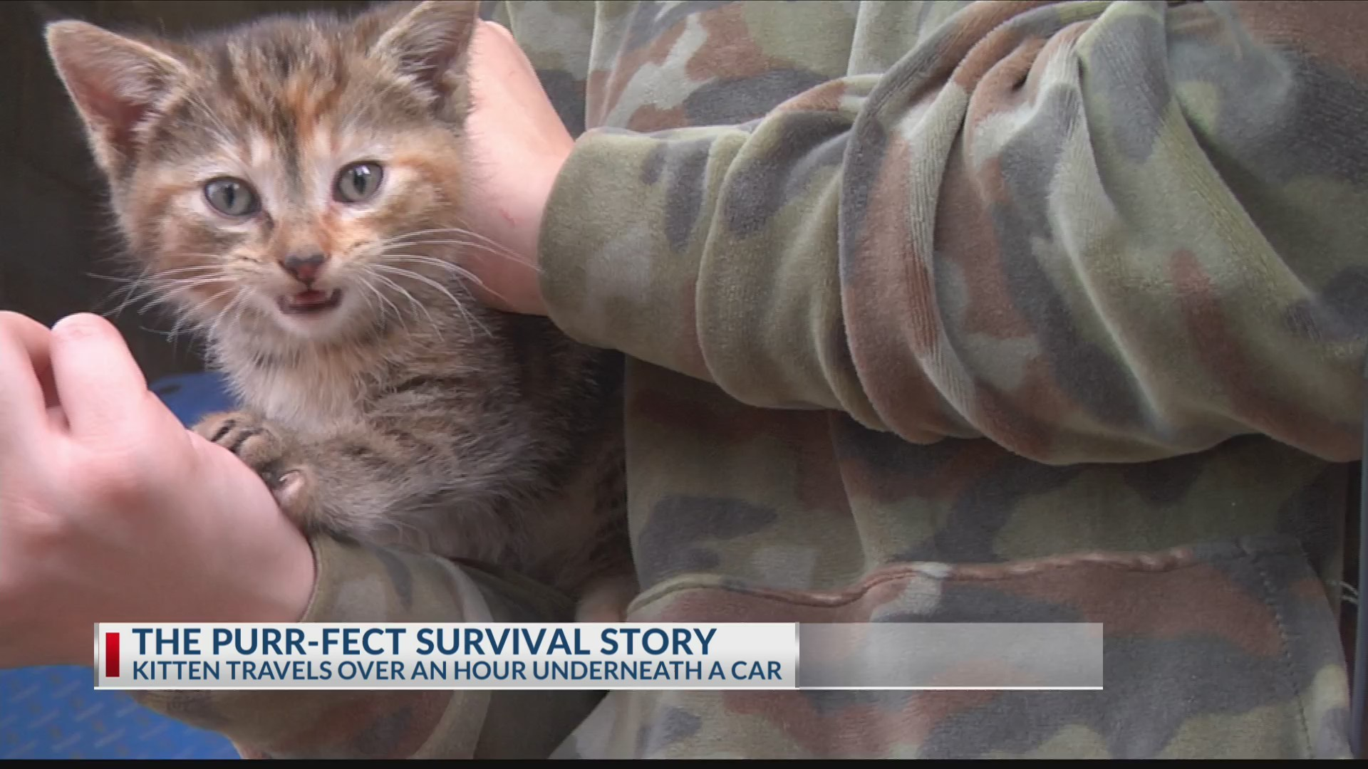 THE_PURR_FECT_SURVIVAL_STORY_0_20190502034103-3156084