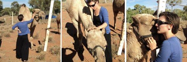 Karla Hooper Gypsy Dreaming Part 3 Reggie Camel Loving