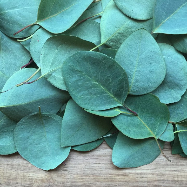 eucalyptus leaves are commonly used in Aufguss infusions.