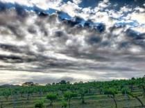 ChrissieCard Clouds Vines