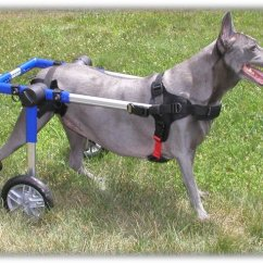 Wheel Chairs For Dogs Hanging Room Chair Wheelchairs Mobility Disability
