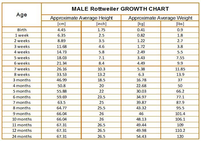 Rottweiler Growth Chart