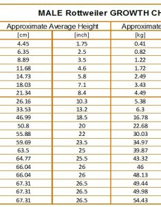 also rottweiler growth chart karma   rottweilers rh karmasrottweilers