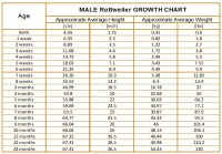 Rottweiler Growth Chart - KARMA'S ROTTWEILERS