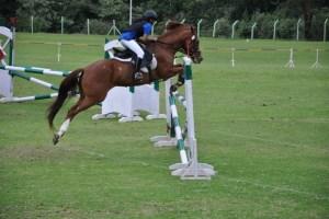 Horse Riding in Bengaluru
