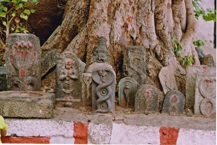 nagarapanchami. Photographer Dinesh Kannambadi
