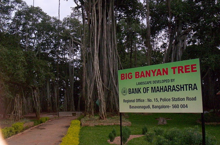 The Big Banyan Tree, Bangalore