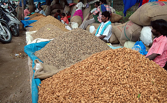 Groundnut festival in Basavangudi. Image source http://www.mangalorean.com/news.php?newstype=broadcast&broadcastid=102425