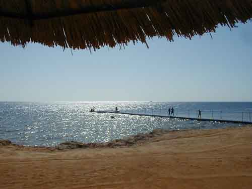 Sharks bay, Sharm El Sheikh, Egypt
