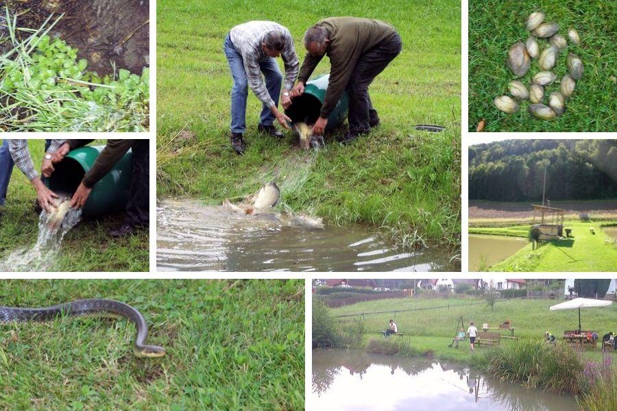 Bepflanzung und Fischbesatz an der Teichanlage
