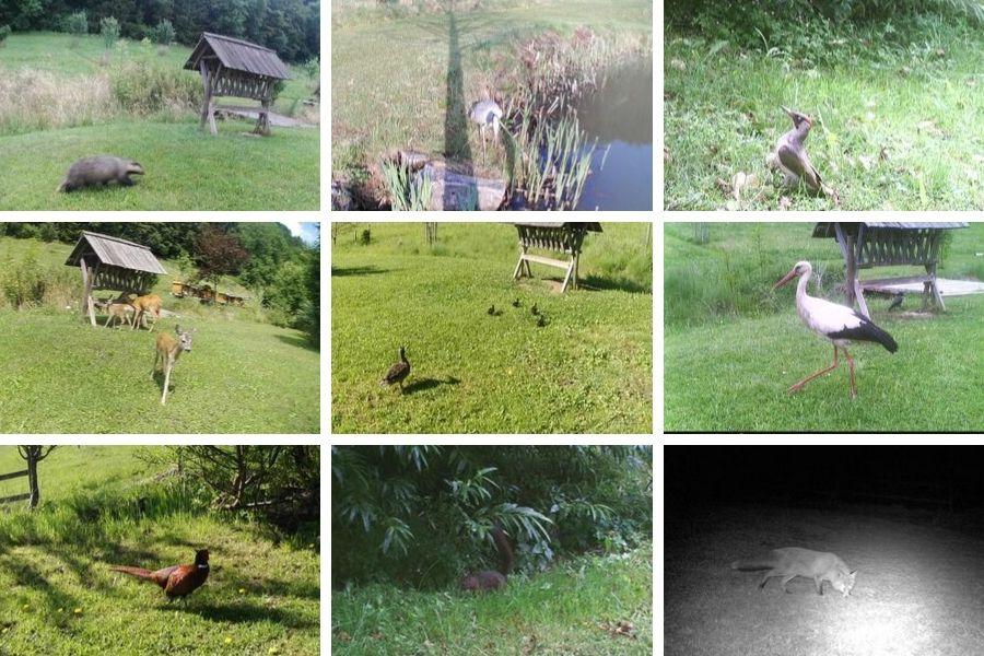 Besondere Freude haben wir auch mit den Tier-Besuchern an der Teichanlage & Streuobstwiese