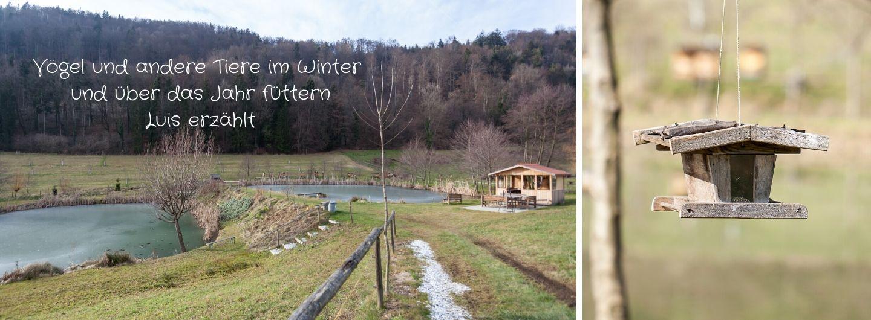 Vögel und andere Tiere im Winter füttern