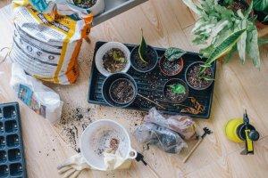 gardening growth soil