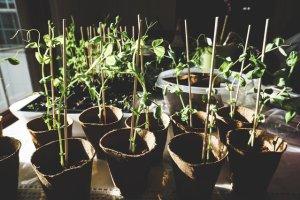 gardening grow leaves