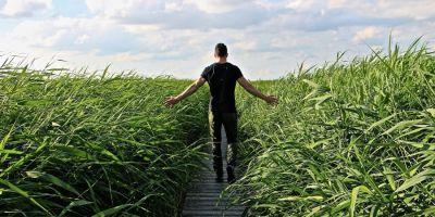 Karriere statt Burnout. Bild: tabeajaichhalt/Pixabay.com//CC0-Lizenz