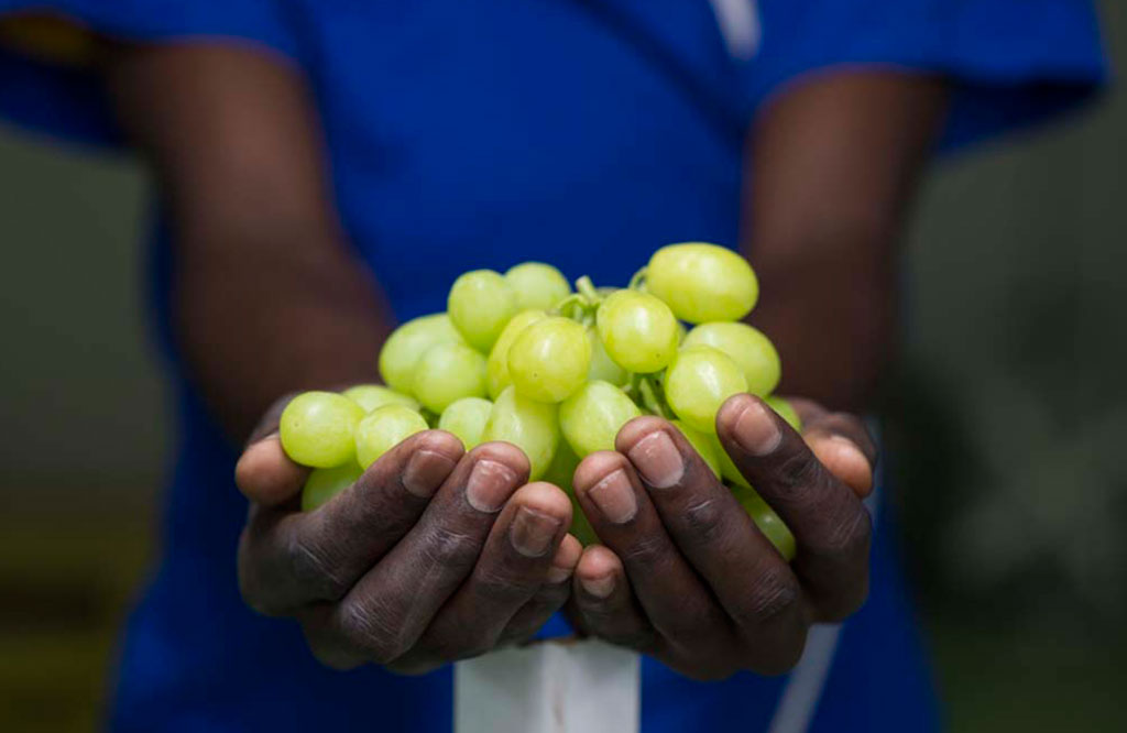 table-grapes3