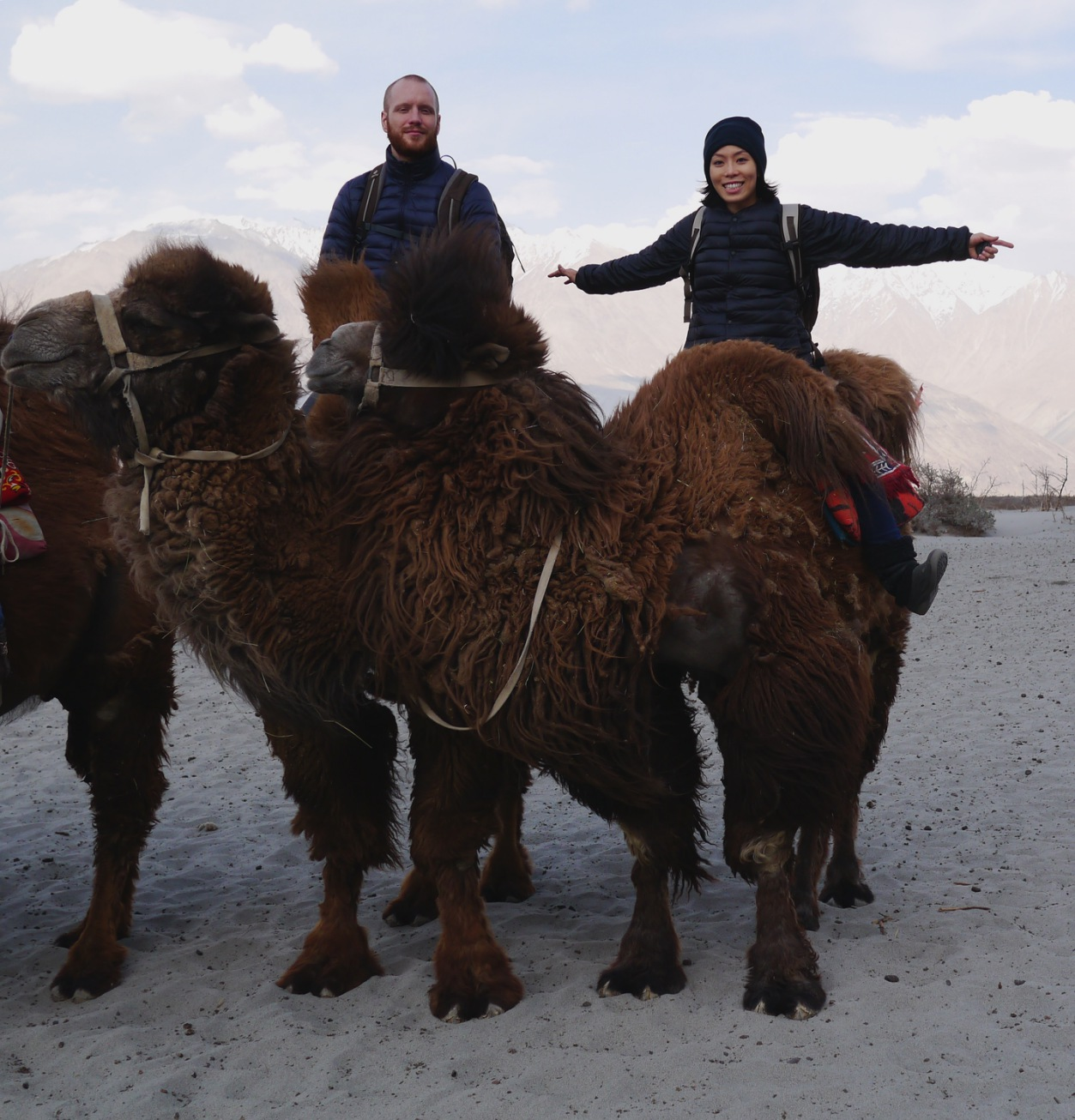 pud-and-karsten-on-bactrian-camels